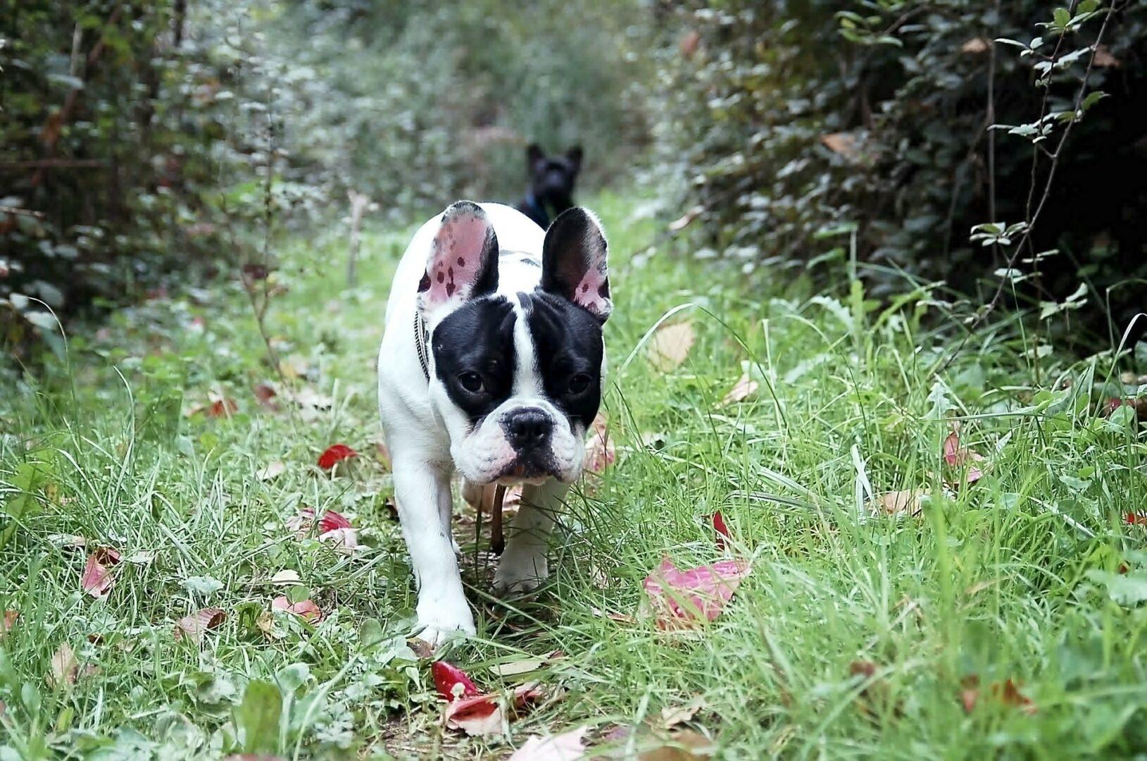 Hunde fühlen sich wohl bei Kleintierpraxis Martin Hejl