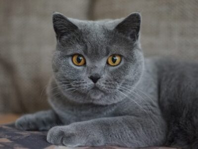 Katzen fühlen sich wohl bei Kleintierpraxis Martin Hejl