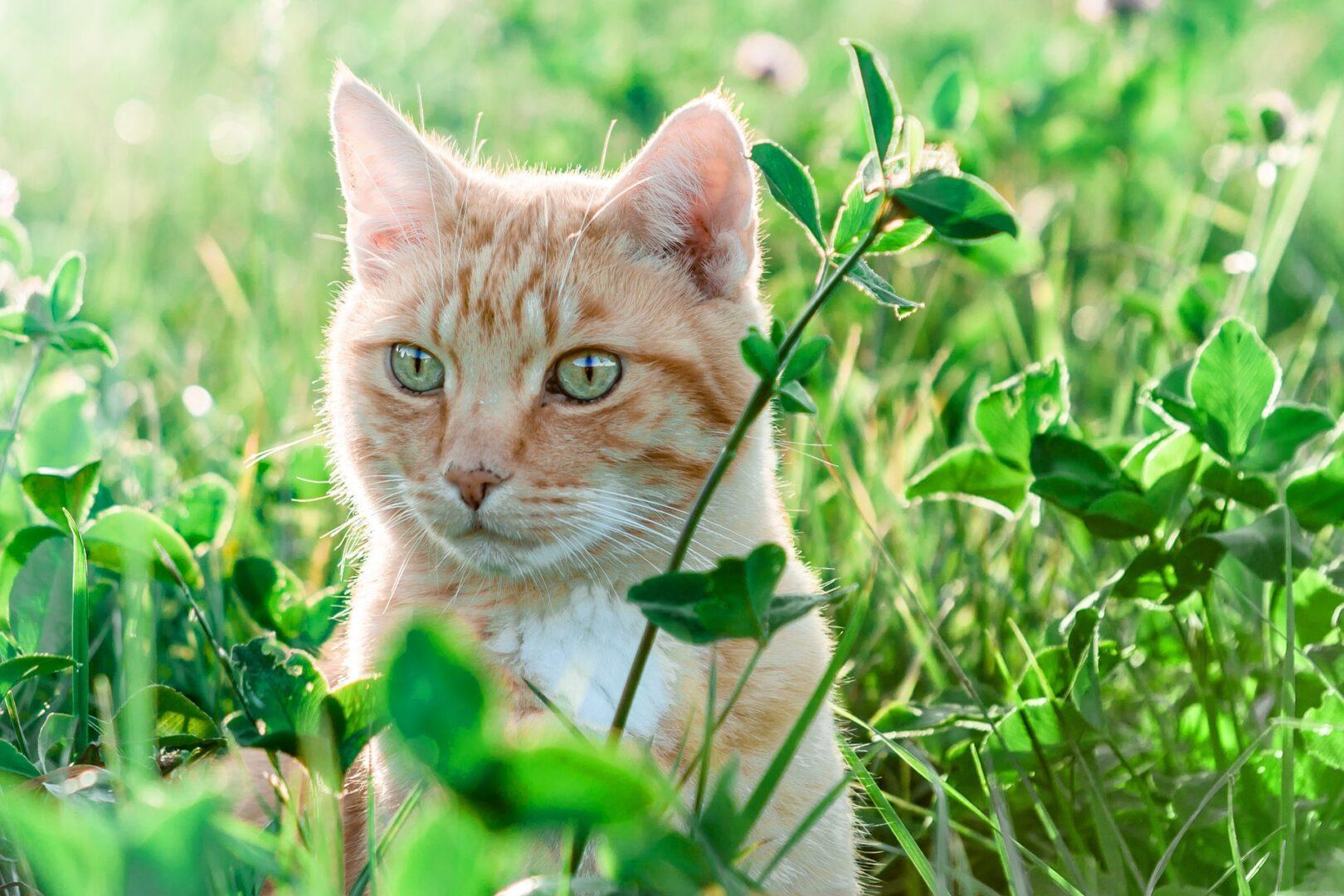 Auch Katzen kriegen öfters Zeckenbisse.