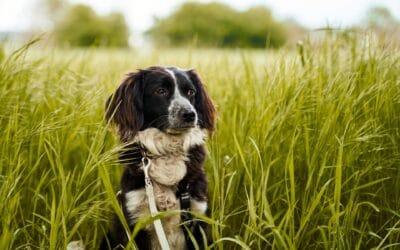 Jetzt erkennen und behandeln: Herbstgrasmilben bei Hunden und Katzen